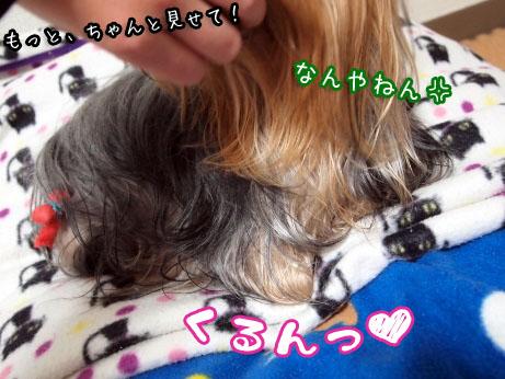 3_20100329191836.jpg