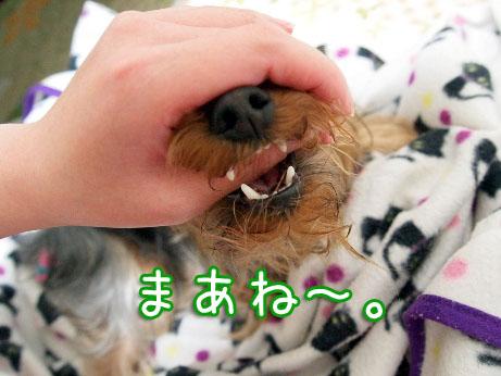 3_20100402191938.jpg