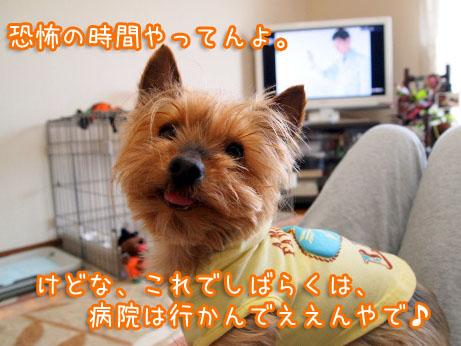 3_20100502160127.jpg