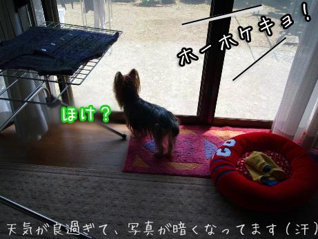 3_20100505184316.jpg