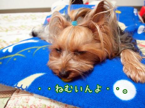 3_20100510191213.jpg