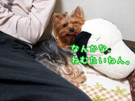 3_20100511191438.jpg
