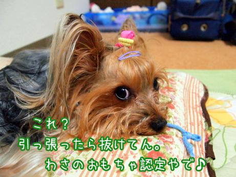 3_20100525191927.jpg
