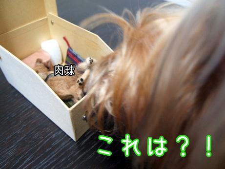 3_20100529203155.jpg