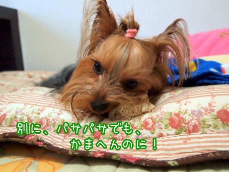 3_20100604173552.jpg