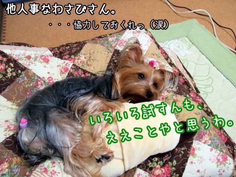 3_20100608181101.jpg