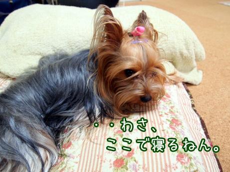 3_20100610174521.jpg