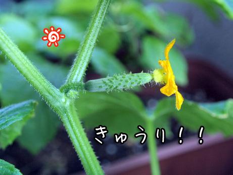 3_20100614161102.jpg