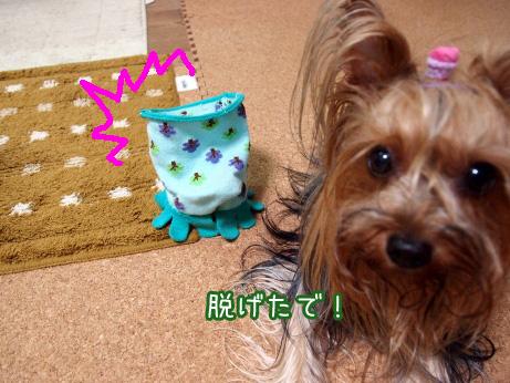 3_20100621193139.jpg