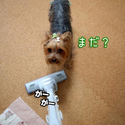 3_20100708155616.jpg