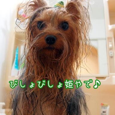 3_20100716191639.jpg