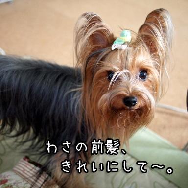 3_20100719194904.jpg