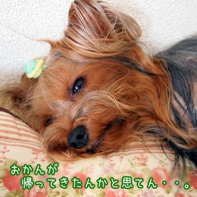 3_20100721164618.jpg