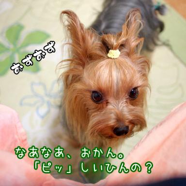 3_20100722184615.jpg