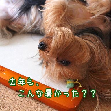 3_20100725190943.jpg
