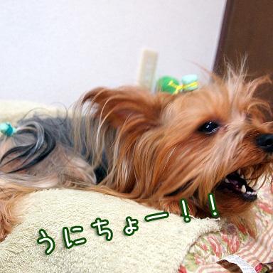 3_20100726191410.jpg