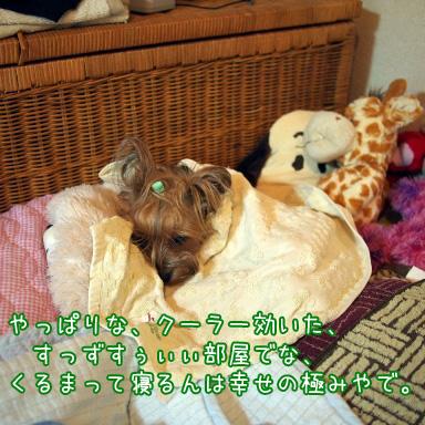 3_20100731193841.jpg