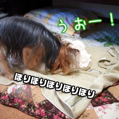 3_20100804191513.jpg