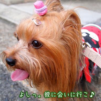 3_20100805193518.jpg