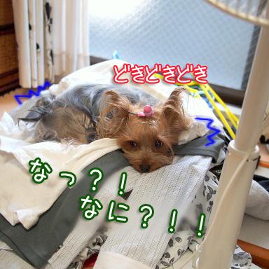 3_20100806164124.jpg
