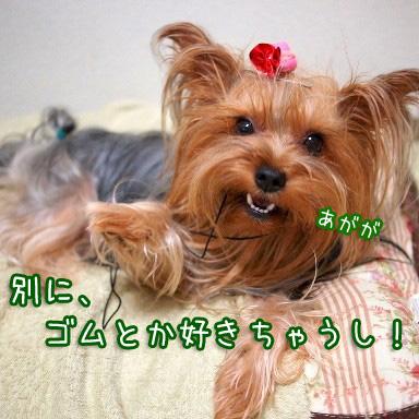 3_20100810201834.jpg