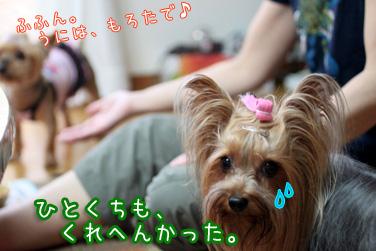 3_20100814210735.jpg