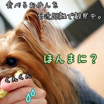 3_20100825200625.jpg