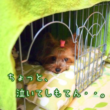 3_20100827205936.jpg