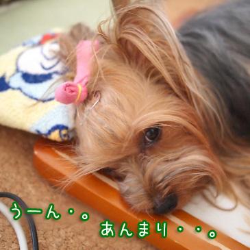 3_20100829194437.jpg