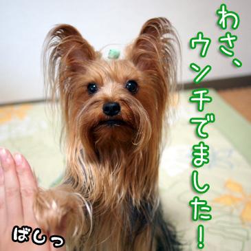 3_20100830164528.jpg