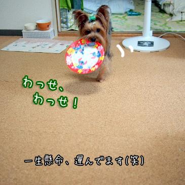 3_20100913163937.jpg