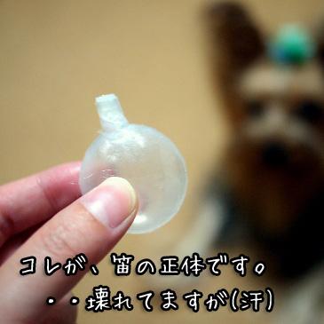 3_20100915192043.jpg