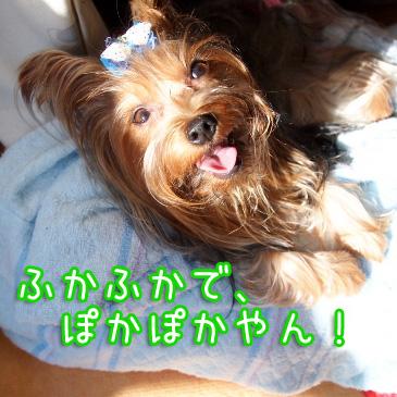 3_20100922195943.jpg