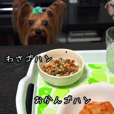 3_20101016191706.jpg