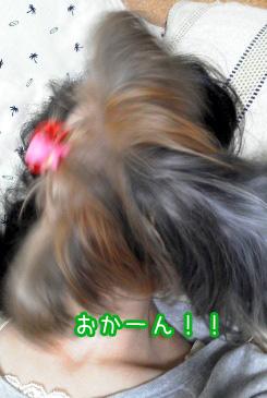 3_20101113185116.jpg