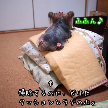 3_20101114190718.jpg
