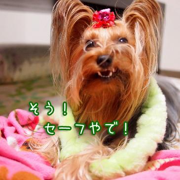 3_20101118190915.jpg