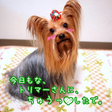 3_20101210194507.jpg