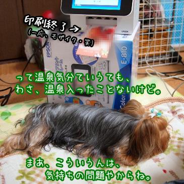 3_20101212202310.jpg