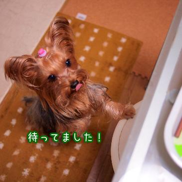 3_20101221212536.jpg