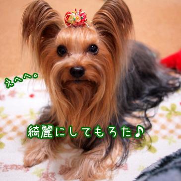 3_20101225160613.jpg