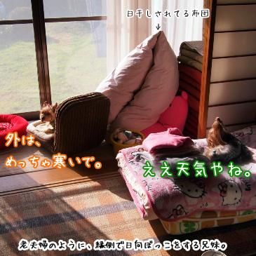 3_20101228150950.jpg