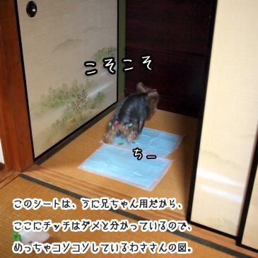 3_20110103184738.jpg