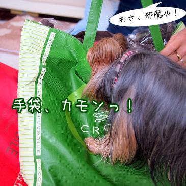 3_20110104200357.jpg