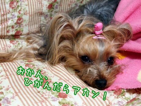 4_20100210173136.jpg