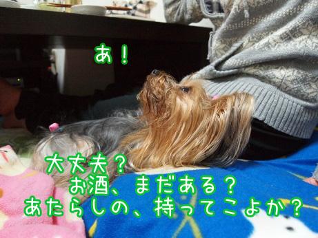 4_20100214194229.jpg