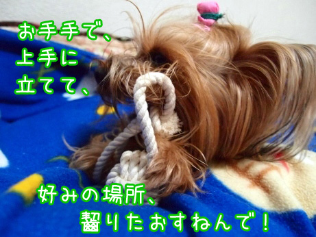 4_20100225193352.jpg