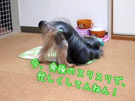 4_20100227192559.jpg
