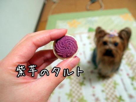 4_20100302194550.jpg