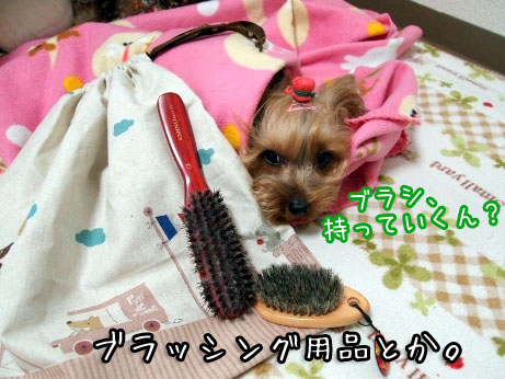 4_20100312182526.jpg